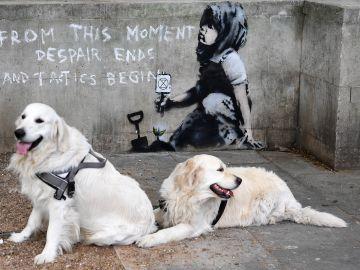Dos perros descansan frente a un muro en el que ha aparecido una supuesta nueva obra de Banksy