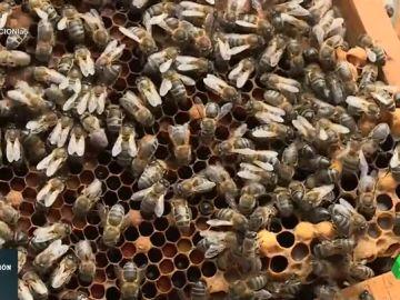Las abejas, esenciales para el ecosistema: así es la vida dentro de una colmena