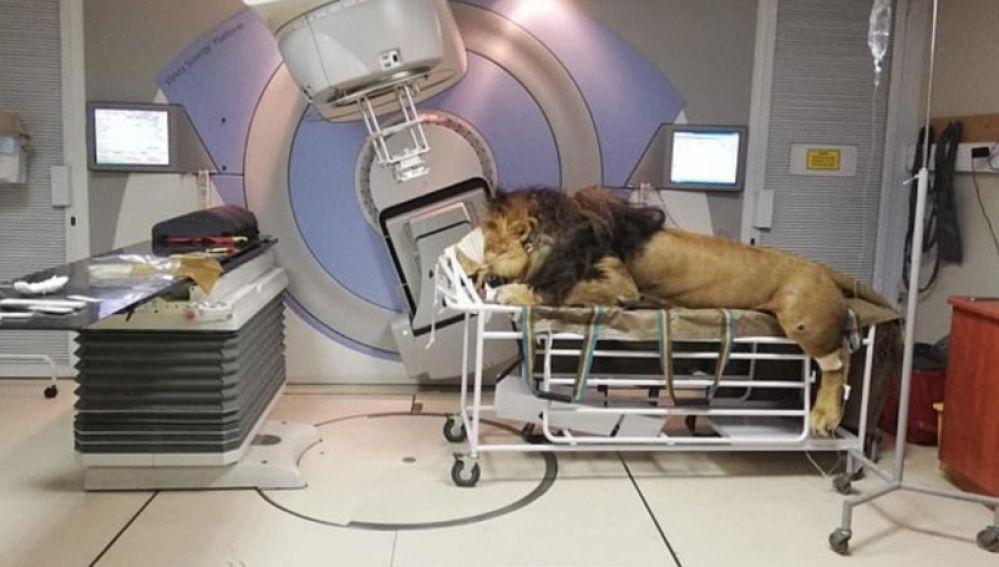 Caos durante su tratamiento en el hospital