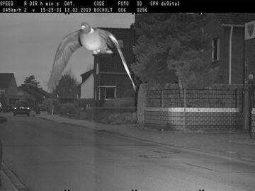 Un radar de tráfico 'caza' a una paloma por exceso de velocidad