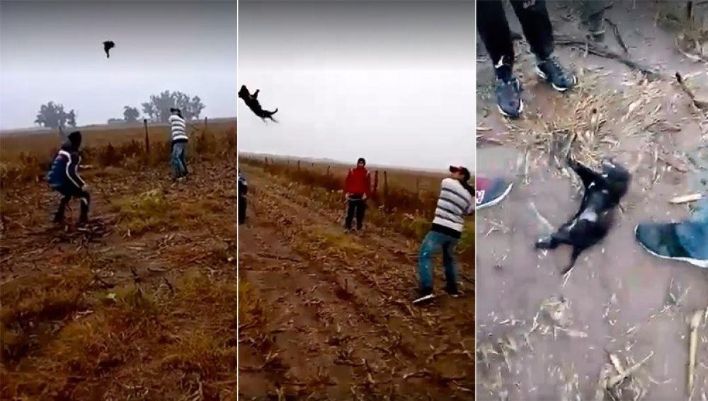 Maltrato animal en Argentina