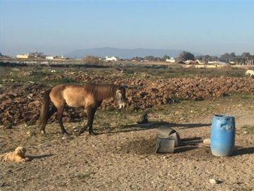 Imagen de la finca con los caballos