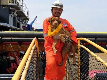 Rescatan a un perro que naufragó