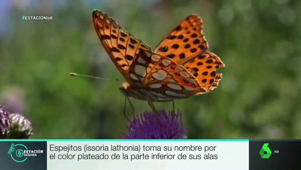 Este es lugar de España en el que se encuentran 80 de las 234 especies de mariposas que existen en el país