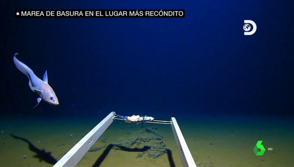 La basura inunda los lugares más recónditos: encuentran plásticos en la parte más profunda conocida en el océano