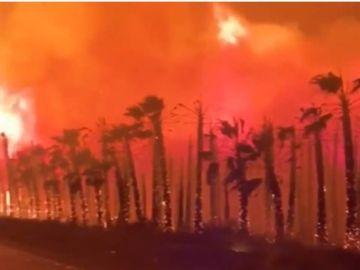 El incendio de un palmeral en Elche obliga a desalojar a 20 personas