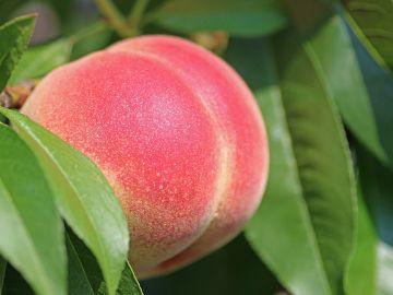 Una simple fruta puede tener mucha connotación sexual