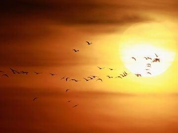 Pájaros en el horizonte