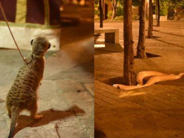 Animales en una feria medieval de Jerez