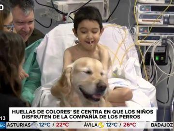 """La felicidad de los niños del 12 de Octubre con Zenit, el perro del Hospital: """"Me gusta cepillarle"""""""