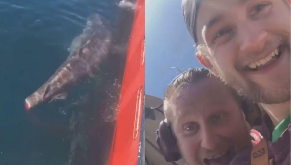 Cortan la cola a un tiburón por diversión y suben su hazaña a las redes sociales