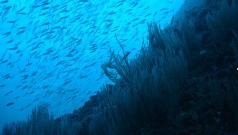 El 17 de la biomasa de especies marinas podria reducirse por el cambio climatico