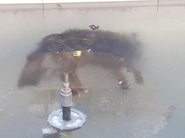 Un perro congelado en una fuente en Potosí (Bolivia)