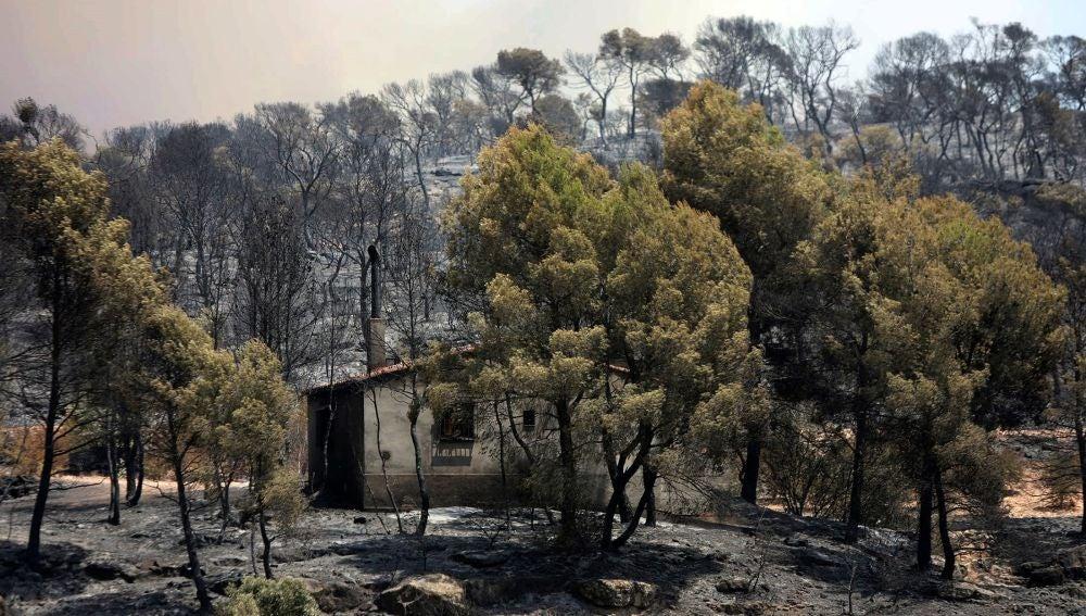 El incendio forestal arrasa varios términos municipales