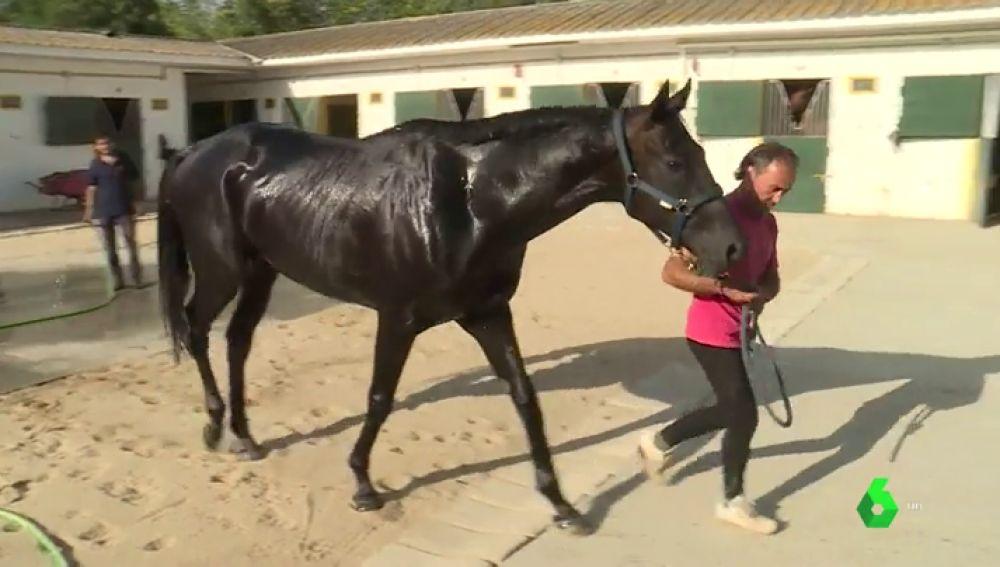 Un entrenador profesional de caballos de carreras