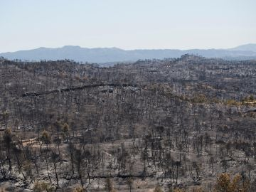 Vista del terreno calcinado este sábado tras el paso del incendio forestal de Tarragona