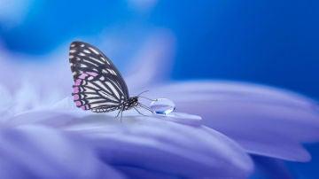 La cámara del iPhone es capaz de reconocer cualquier insecto
