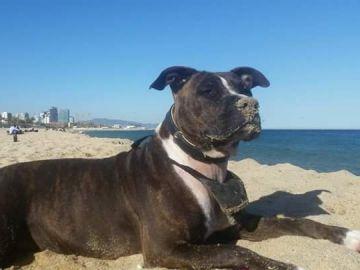 La perra tiroteada en Barcelona