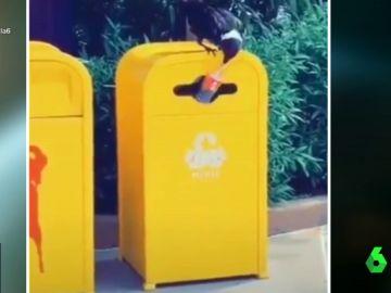 El cuervo 'reciclador': introduce una botella de plástico en el contenedor