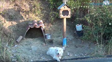 El perro que espera a su dueño fallecido durante año y medio