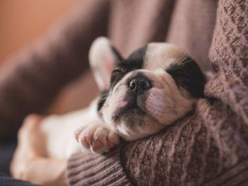 Cachorro en los brazos de su dueño