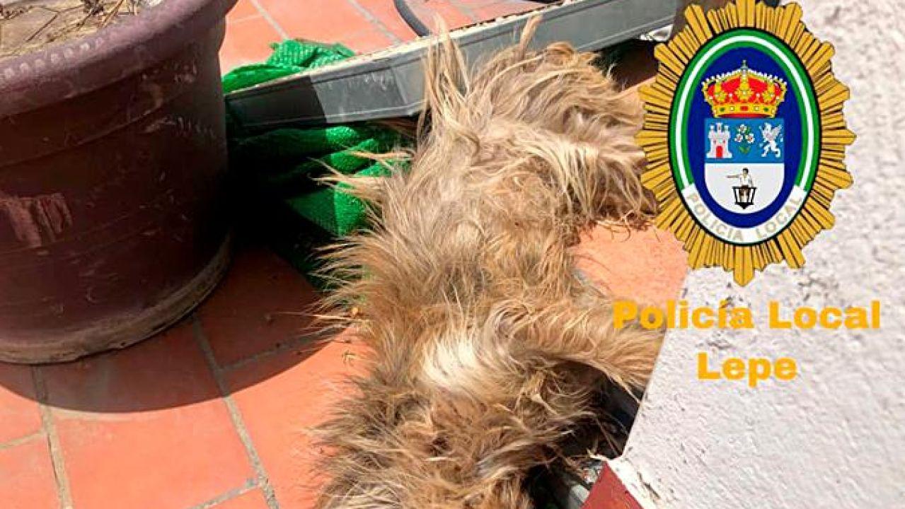 El perro fallecido después de estar seis días sin ninguna asistencia.