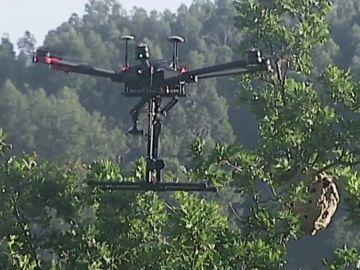 Dron junto a nido de avispas velutinas
