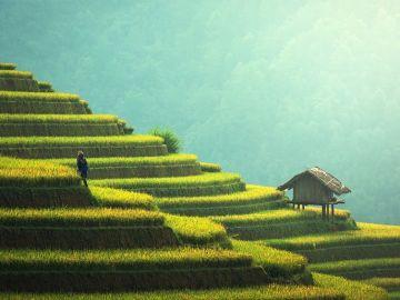 Plantación de arroz en Tailandia