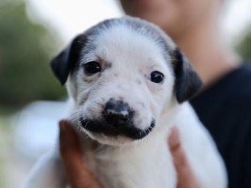 Imagen del cachorro Salvador Dalí