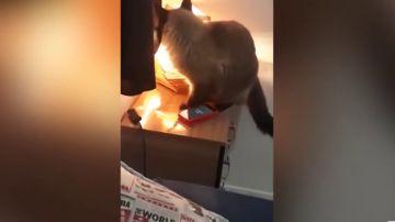 Un gato apagando la alarma de un móvil