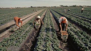 Varios trabajadores laboran en el campo en un día de sol