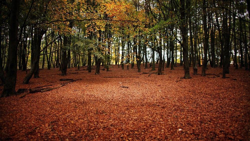 Bosque en otoño