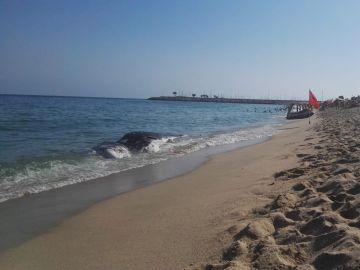 Ballena muerta en la playa de Mataró