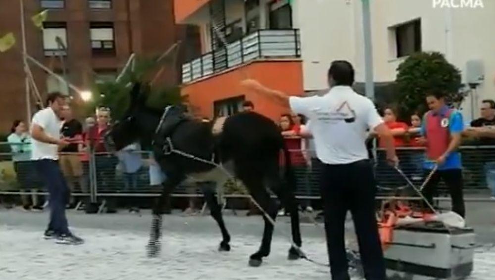 Momento del festejo en el que el burro es golpeado numerosas veces
