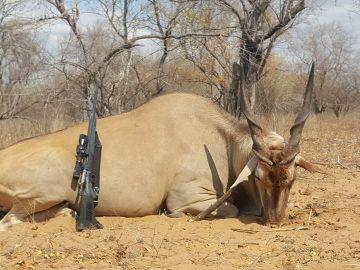 Animal cazado en la granja de Imberba Rakia