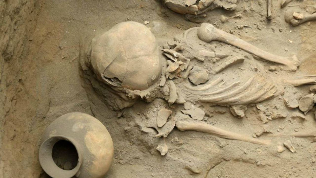 Restos óseos de las excavaciones de Pampa la Cruz
