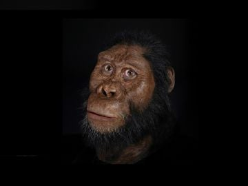 Ponen cara a uno de nuestros antepasados más remotos