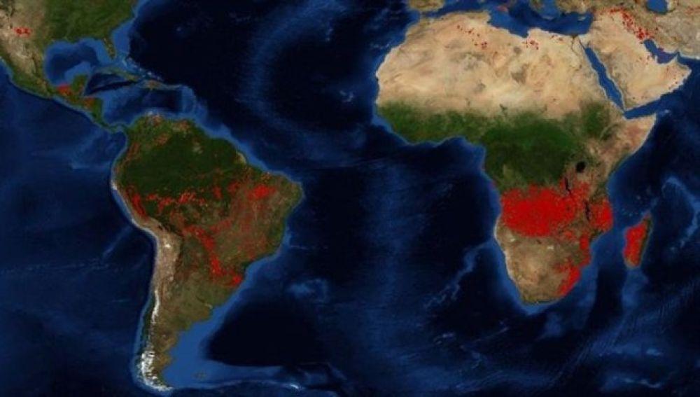 África: Las cifras alarmantes del otro pulmón del mundo en llamas