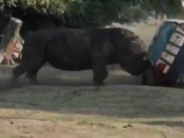 Un rinoceronte furioso vuelca un coche en un parque safari de Alemania