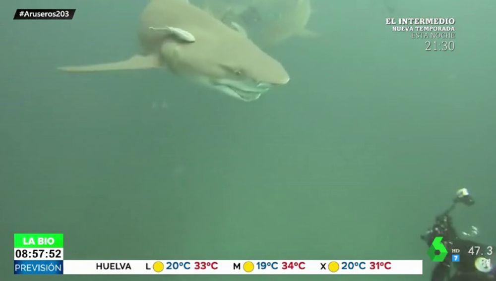 sonrisa tiburon
