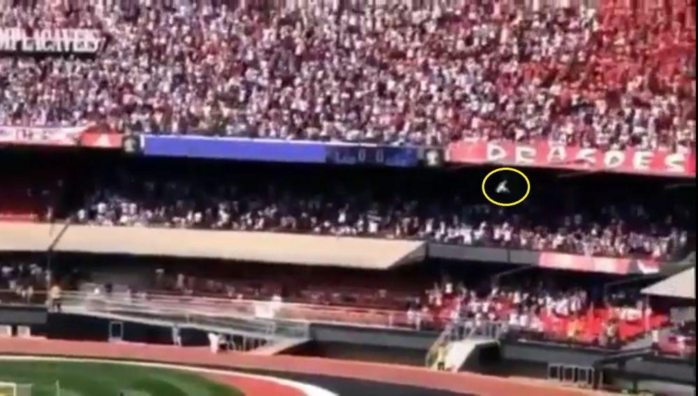 Aficionado cayendo desde las gradas del estadio Morumbí