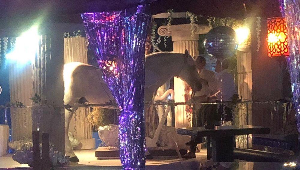 El caballo blanco exhibido en la Mae West de Granada