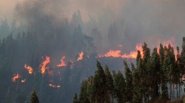 Imagen del incendio forestal en Huelva