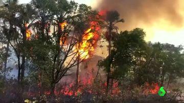 Parte de la Amazonia quemada ya había sido explotada en 2016