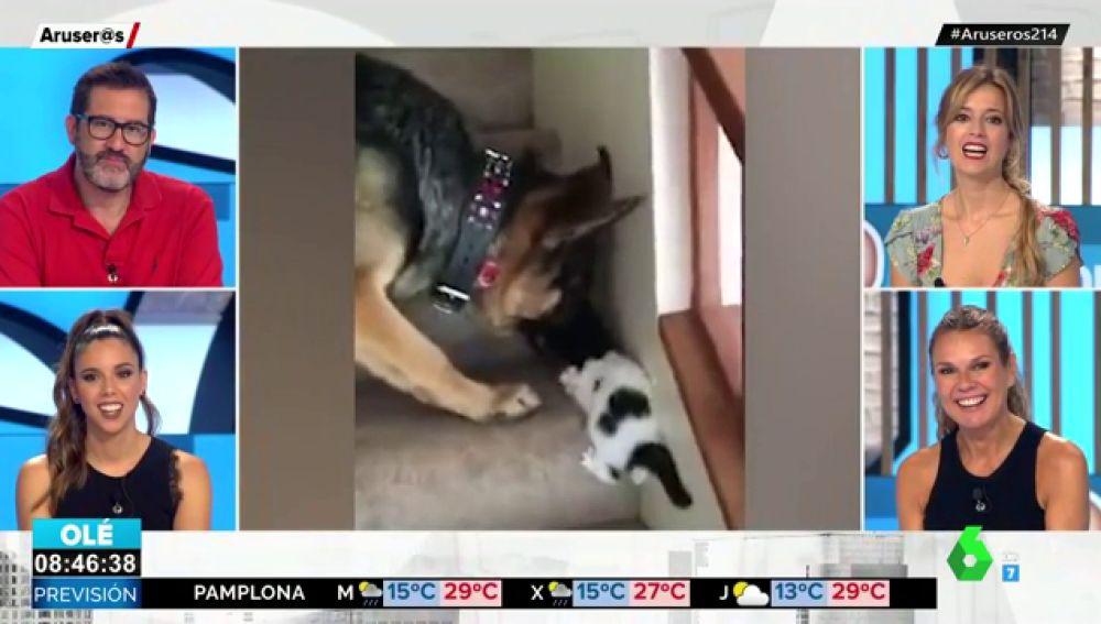 El tierno gesto de un perro que ayuda a un cachorro de gato a subir las escaleras