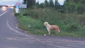 Un perro se reúne con sus dueños tras esperarles durante cuatro años al borde de una carretera
