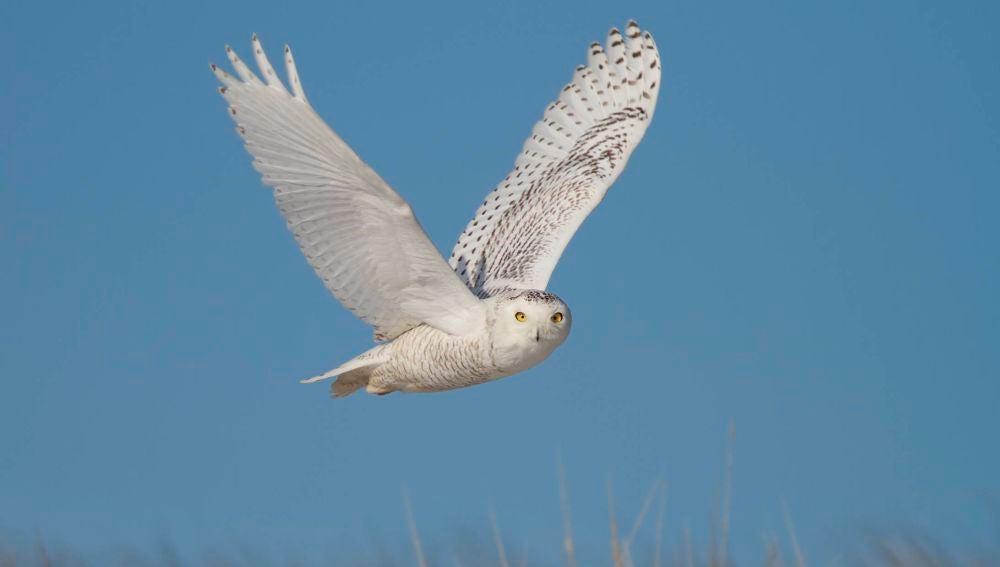 Una de cada cuatro aves desaparece en Norteamerica desde 1970