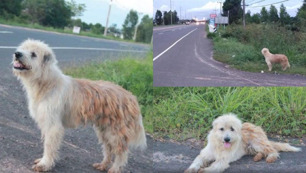 Bonbon, el perro que esperó a sus dueños durante cuatro años