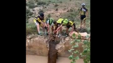 Cuatro ciclistas rescatan a un ciervo