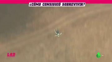 Sobrevive al salto de un avión sin paracaídas